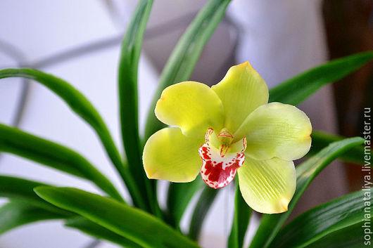 Цветы ручной работы. Ярмарка Мастеров - ручная работа. Купить Орхидея из холодного фарфора.Цимбидиум зеленый. Handmade. Орхидея цимбидиум