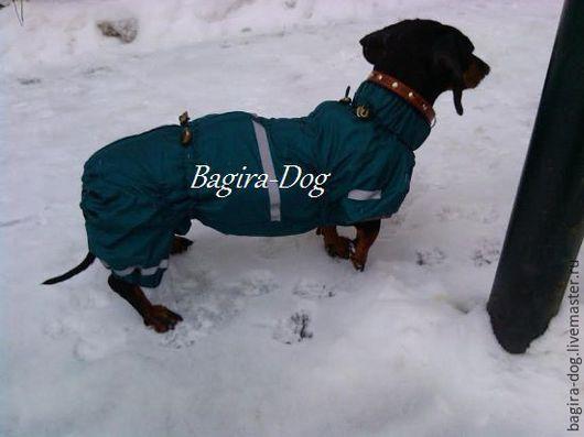 Одежда для собак, ручной работы. Ярмарка Мастеров - ручная работа. Купить Комбинезоны для такс. Handmade. Комбинированный, пошив для собак недорого