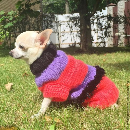 """Одежда для собак, ручной работы. Ярмарка Мастеров - ручная работа. Купить Шерстяной свитер """"Фламинго"""". Handmade. Разноцветный, для собак"""