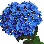 Цветы и флористика handmade. Livemaster - original item Hydrangea blue. Flower polymer clay.. Handmade.