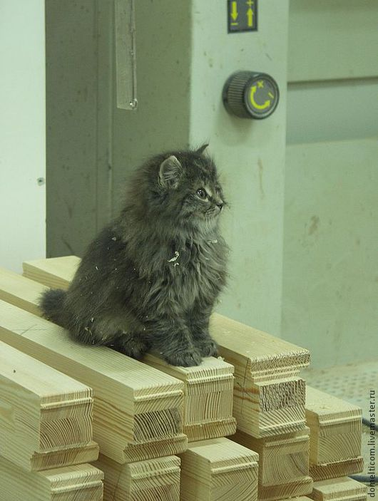 Котёнок Марфа зорко следит за сохранностью материалов на нашем производстве:-)