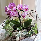 Цветы и флористика handmade. Livemaster - original item The Floriana Orchid. Orchidarium. Handmade.