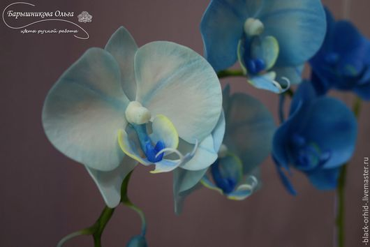 Цветы ручной работы. Ярмарка Мастеров - ручная работа. Купить Голубая орхидея фаленопсис (холодный фарфор). Handmade. Орхидея, цветы