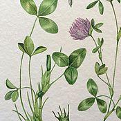 Картины и панно ручной работы. Ярмарка Мастеров - ручная работа Ботаническая иллюстрация Клевер. Handmade.