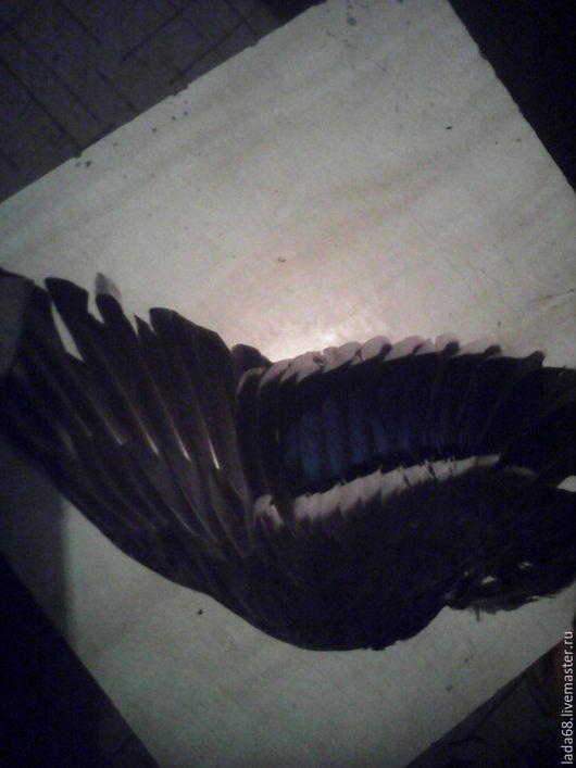 Другие виды рукоделия ручной работы. Ярмарка Мастеров - ручная работа. Купить перья селезня дикого кавказского Крылья. Handmade.