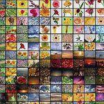 foto-mozaika