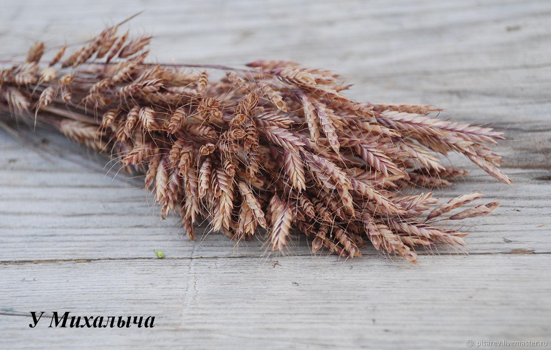 Сухоцветы, Сухоцветы, Кашин,  Фото №1