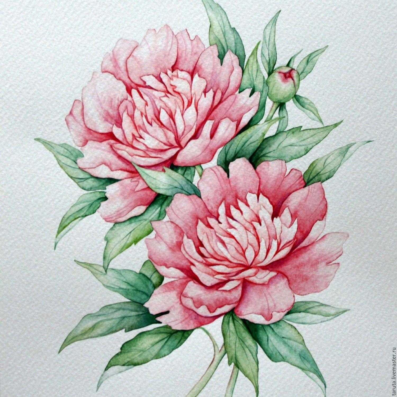 Рисунок пионы цветы