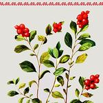 Брусница (Надежда) (brusniza) - Ярмарка Мастеров - ручная работа, handmade