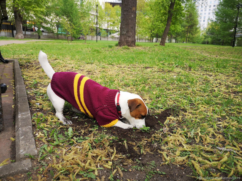 Одежда для питомцев: свитер для собак и кошек, Одежда для собак, Москва, Фото №1