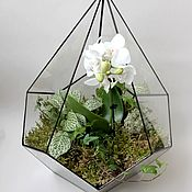 Цветы и флористика handmade. Livemaster - original item the floriana. Geometric Floriana with a white Orchid and fittonia. Handmade.