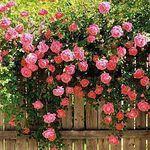 Роза Лил (kvetina100) - Ярмарка Мастеров - ручная работа, handmade