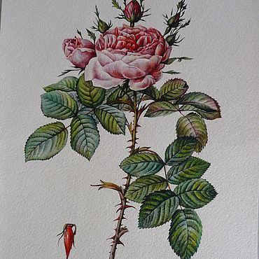 Картины и панно ручной работы. Ярмарка Мастеров - ручная работа Картины: Акварельная ботаника. Handmade.