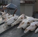Рога и копыта (dermestidae) - Ярмарка Мастеров - ручная работа, handmade
