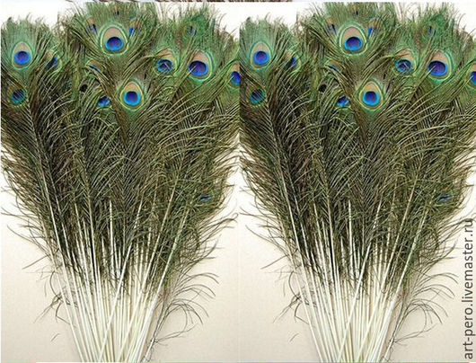 Другие виды рукоделия ручной работы. Ярмарка Мастеров - ручная работа. Купить Длинные перья павлина 85 см декоративные, натурального цвета. Handmade.