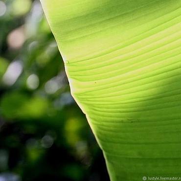 """Картины и панно ручной работы. Ярмарка Мастеров - ручная работа """"Зеленый парус..."""" Бали, 2017 г.. Handmade."""