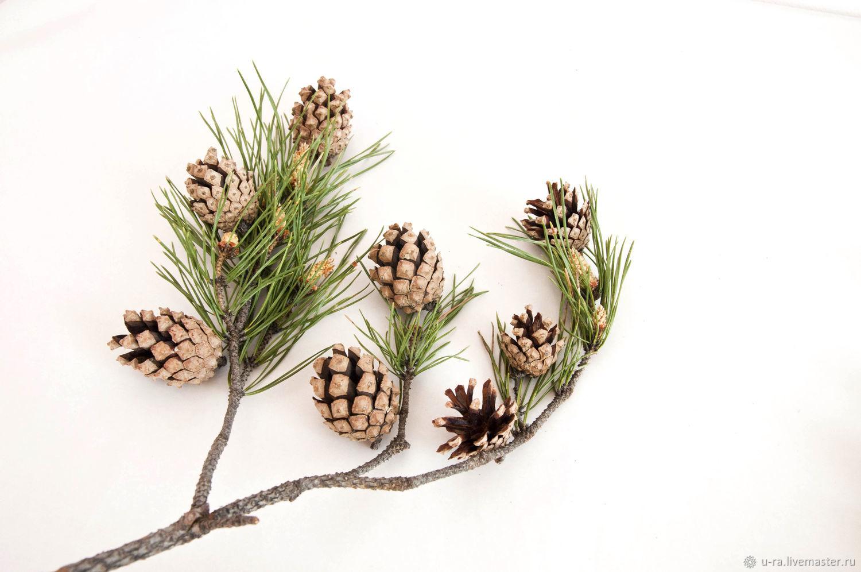 Шишки сосновые 4-5 см, Наборы, Ермаковское,  Фото №1