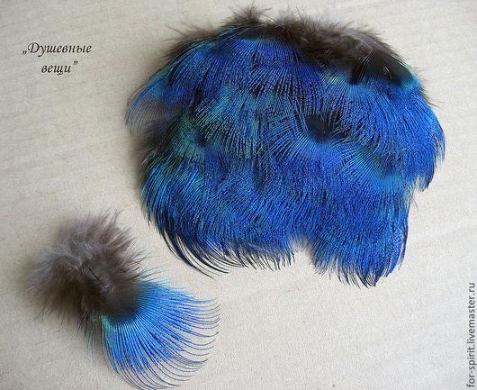 Другие виды рукоделия ручной работы. Ярмарка Мастеров - ручная работа. Купить (10 шт) Перья павлина (синие). Handmade.