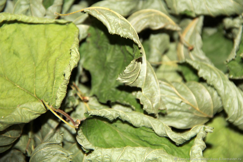Сухие листья лещины ( орешника), Материалы, Санкт-Петербург, Фото №1