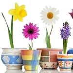 Flowers for soul - Ярмарка Мастеров - ручная работа, handmade