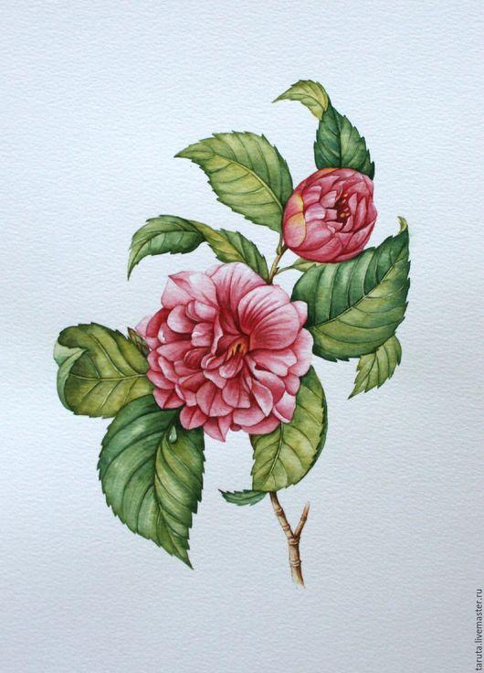 Рисунок `Розовая камелия`  (акварель)