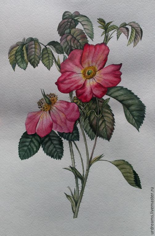 Картины цветов ручной работы. Ярмарка Мастеров - ручная работа. Купить Дикая роза. Handmade. Разноцветный, акварельные цветы