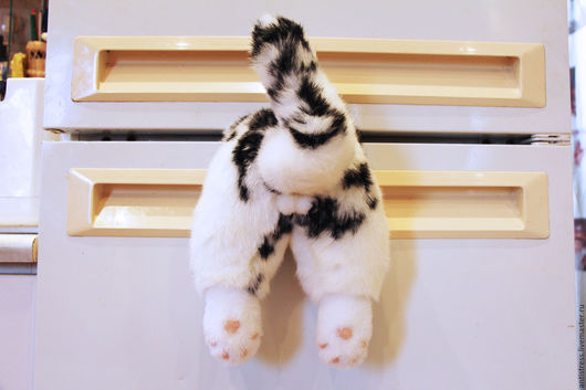 Такому коту рад любой холодильник ну и хозяева - тоже.
