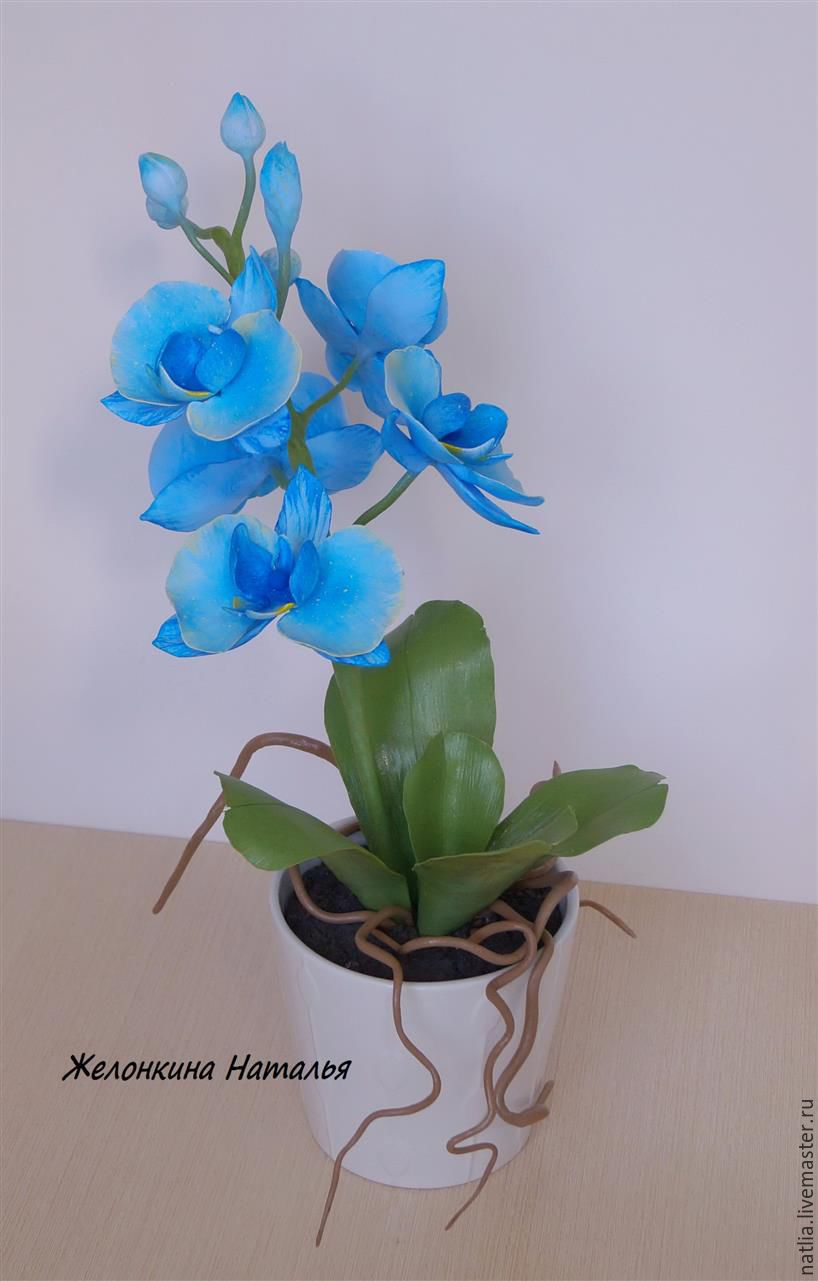 Купить голубую орхидею