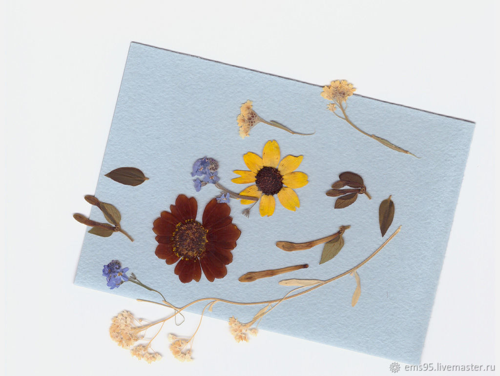 Открытка с сухоцветами в москве