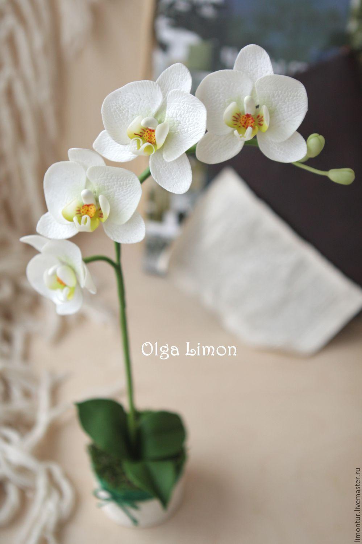 Орхидея фаленопсис из холодного фарфора мастер класс с пошаговым