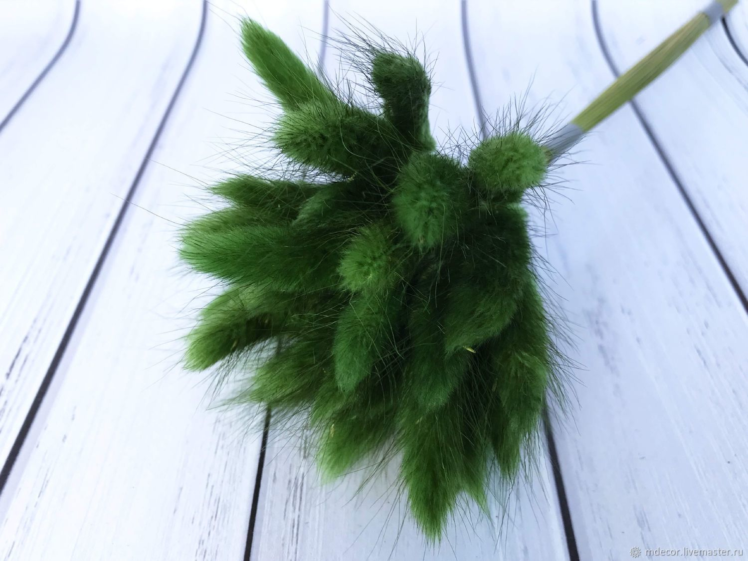 Green lagurus 30 cm 30 spikelets, The dried flowers, Moscow,  Фото №1