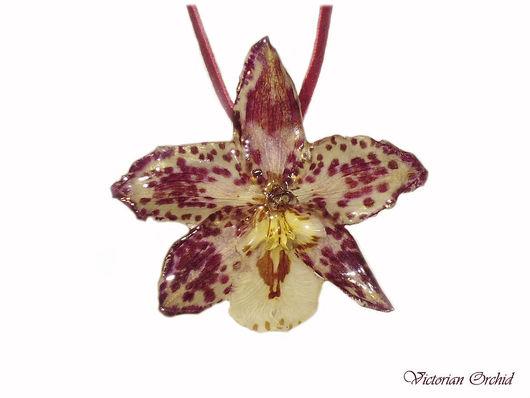 Эта орхидея продана.  Можно встать в лист ожидания, прислав мне сообщение.