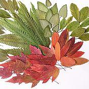 Материалы для творчества handmade. Livemaster - original item Various dried leaves for creativity (79 pcs). Handmade.