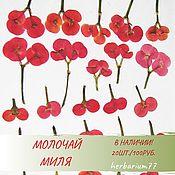 Сухоцветы ручной работы. Ярмарка Мастеров - ручная работа ГЕРБАРИЙ засушенные цветы и листья купить онлайн. Handmade.