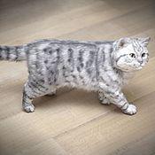 Куклы и игрушки handmade. Livemaster - original item Silver striped British cat. Realistic toy. Handmade.