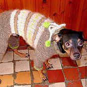 Для домашних животных, handmade. Livemaster - original item Knitted overalls for dogs from dog Pooh.. Handmade.