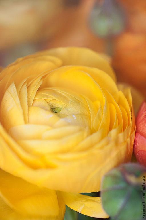 Фотокартины ручной работы. Ярмарка Мастеров - ручная работа. Купить Фотокартина. Handmade. Желтый, цветы, природа, радость, весна, фотография