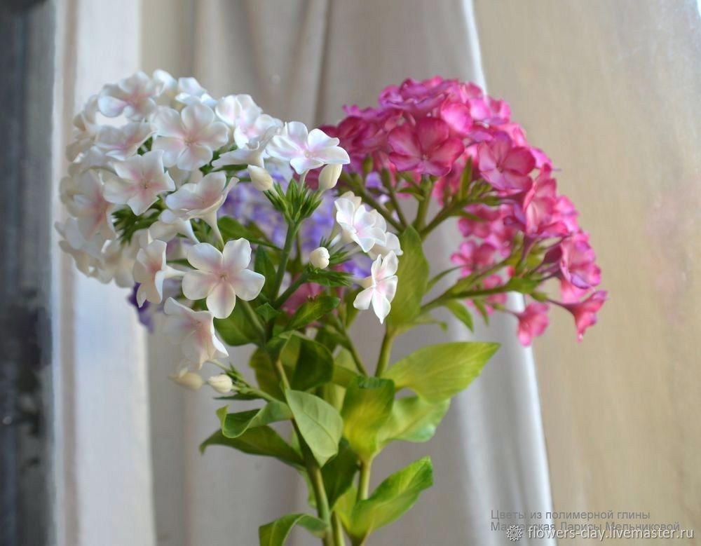 Доставка цветов флокс чита, магазин цветочный