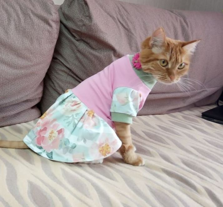Clothing for cats 'Dress Romance', Pet clothes, Biisk,  Фото №1