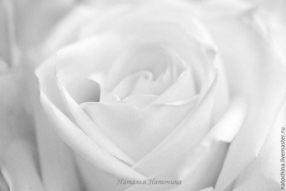 Фотография черно-белая Роза, Фотокартины, Санкт-Петербург,  Фото №1