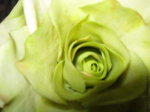 Искусственные растения ручной работы. Ярмарка Мастеров - ручная работа. Купить Роза зеленая. Handmade. Салатовый, полимерная глина