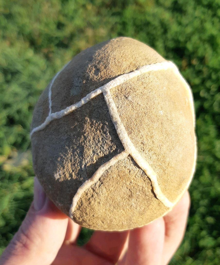 Септария(черепаший камень), Элементы интерьера, Майкоп,  Фото №1