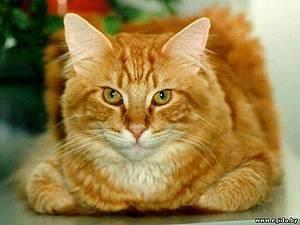 Магазин мастера Ольга samara-cat на Ярмарке Мастеров