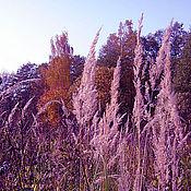 Картины и панно ручной работы. Ярмарка Мастеров - ручная работа Лиловые травы. Handmade.