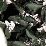 Екатерина Дарская (stilnye-shtychi) - Ярмарка Мастеров - ручная работа, handmade