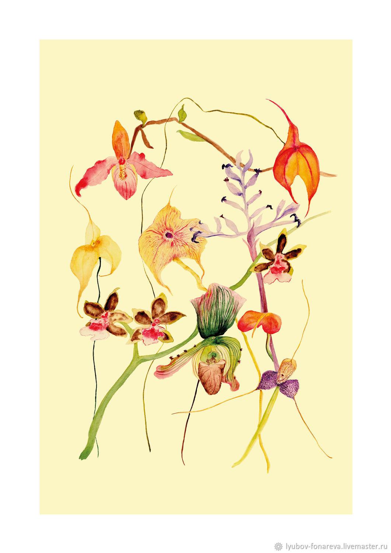 Ботаническая иллюстрация-плакат ОРХИДЕИ (1), А3, Иллюстрации, Москва,  Фото №1