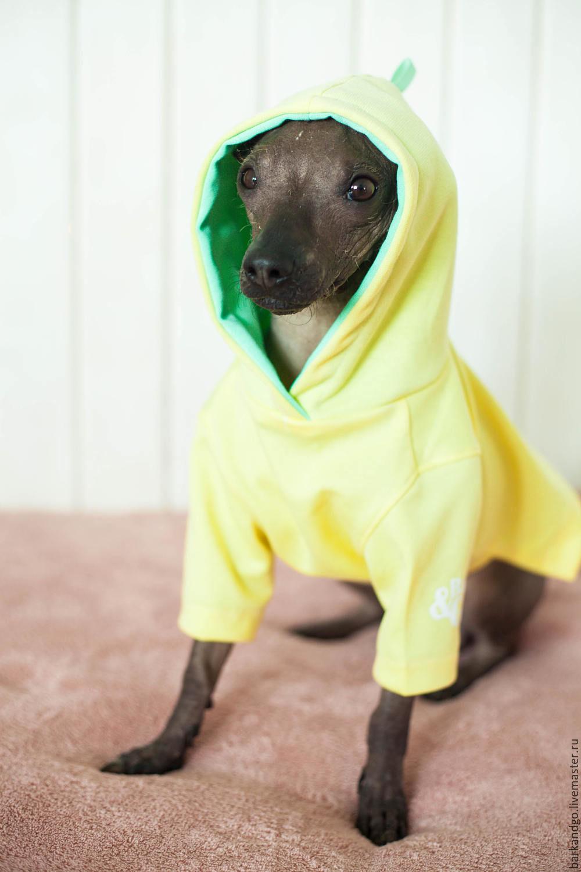 Худи для собак