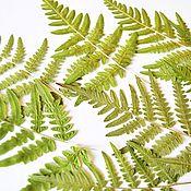 Материалы для творчества handmade. Livemaster - original item Large, dried fern leaves(9pcs in a set). Handmade.
