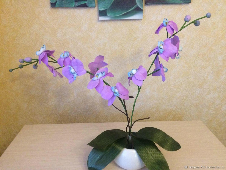 Орхидея фаленопсис, Вазы, Зимовники,  Фото №1