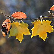 """Украшения ручной работы. Ярмарка Мастеров - ручная работа Серьги """"Кленовые листья"""". Handmade."""